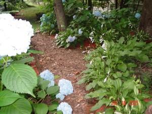 Garden_Jul2005_Image117