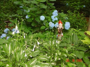 Garden_Jul2005_Image125